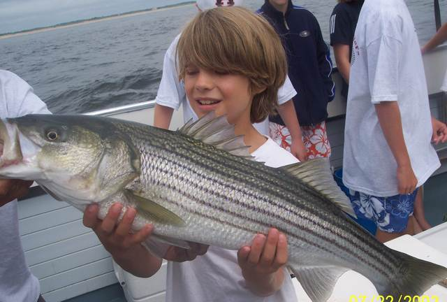 Striped bass caught aboard the Erica Lee II.